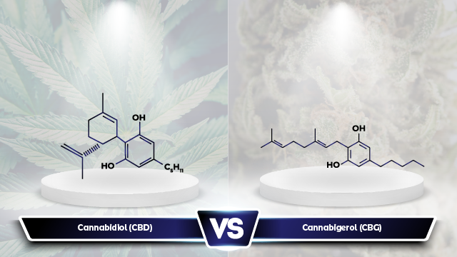 Understanding CBG vs CBD: What Are the Differences Between the Two?