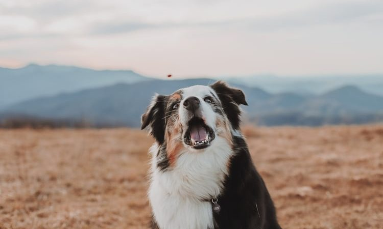 Debunking The Myths Behind CBD Oil For Dogs (And Humans, Too)